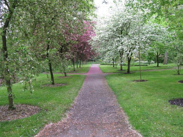 Szczepione drzewa i krzewy ogrodowe  bardzo malownicze