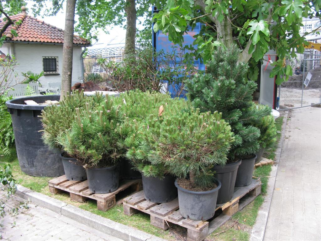 Planten En Bomen : Nieuwe planten en bomen art 110609a bomennederlands blog