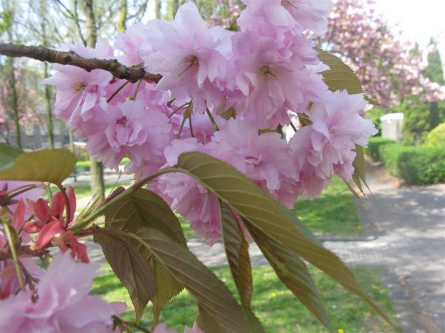 bloesem in binnentuin
