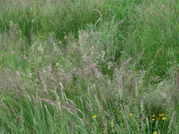 gras in Klarenbeek
