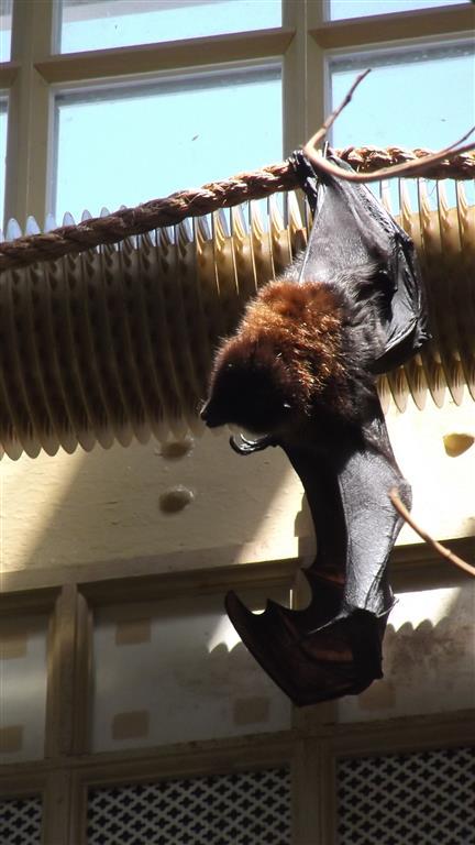 vleermuis in Artis