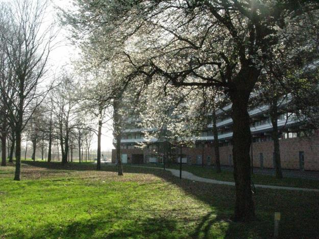 Prunus Zuidoost
