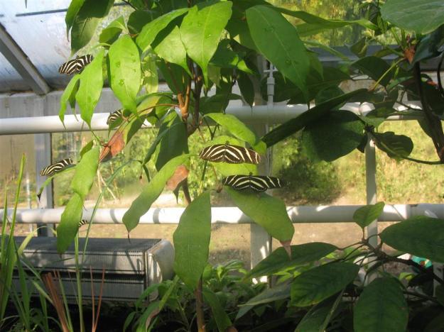 vlinderkas Hortus