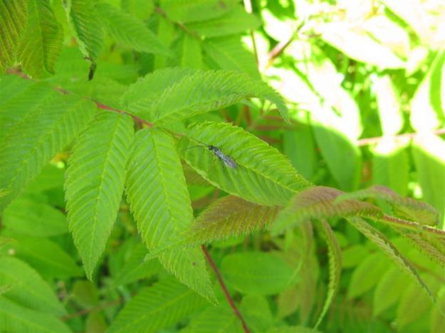 bijenstal in het Gaasperpark met een insekt