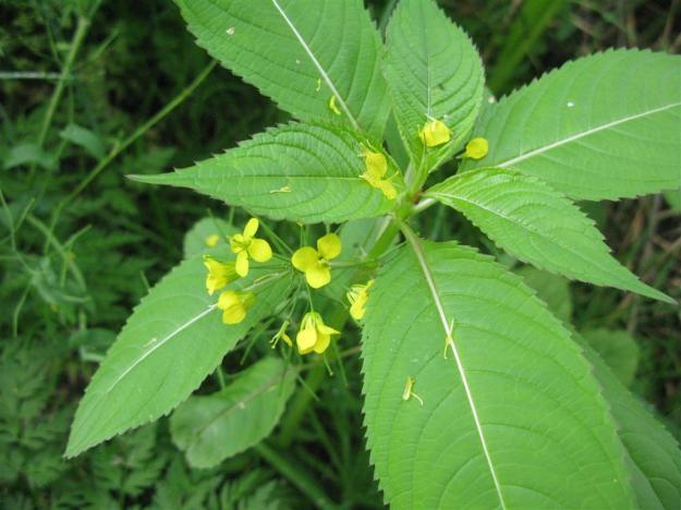 onbekende gele bloem