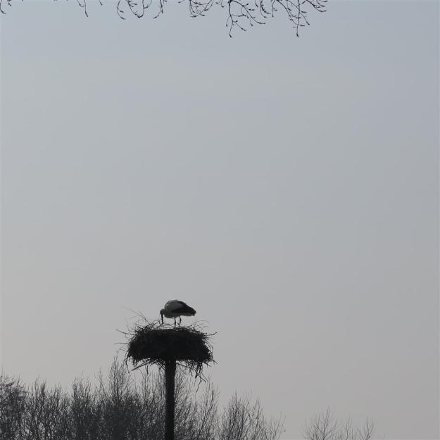 Ooievaar in Vondelpark