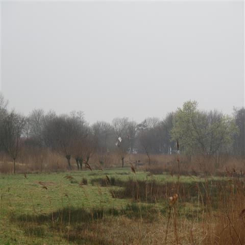 Salix/wilg