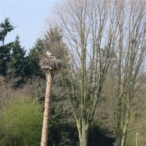 Ooievaar Amstelpark